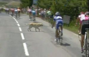 Chien au Tour de France